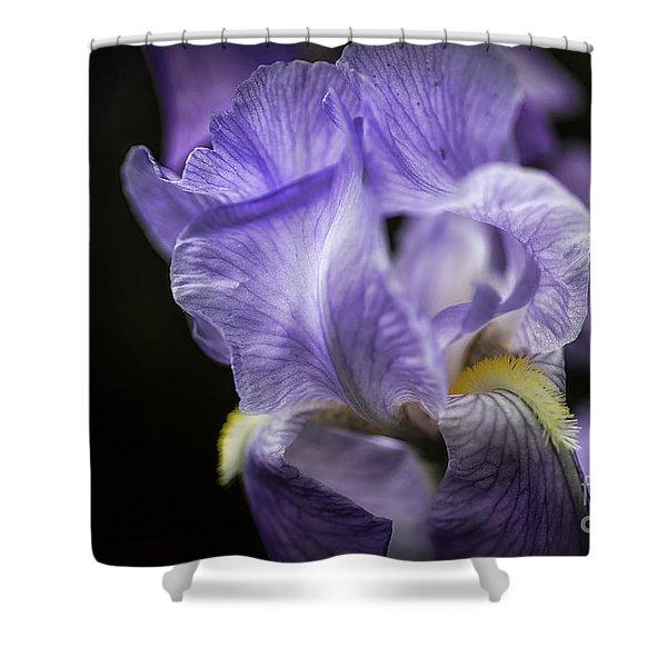 Soul Blossom - Blue Bearded Iris  Shower Curtain