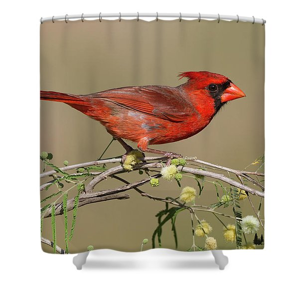South Texas Cardinal Shower Curtain