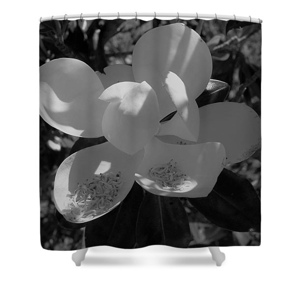 Southern Magnolia In Black And White Shower Curtain