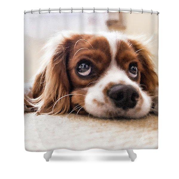 Spaniel Puppy Dwp2785074 Shower Curtain
