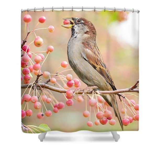 Sparrow Eating Berries Shower Curtain
