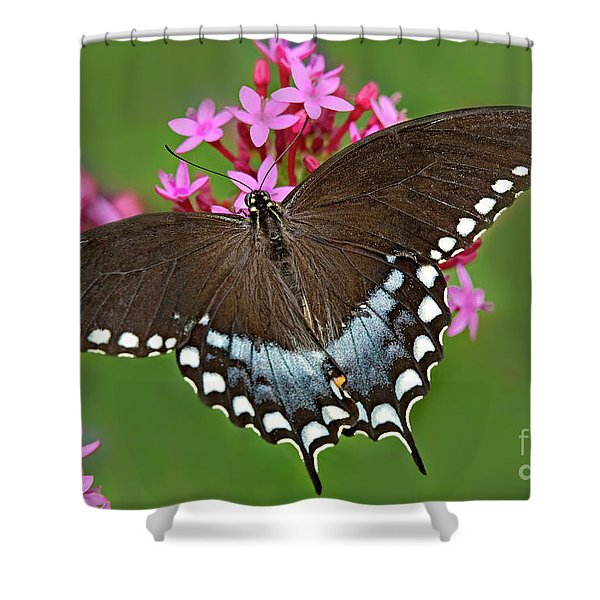 Spicebush Swallowtail Papilio Trollus Shower Curtain