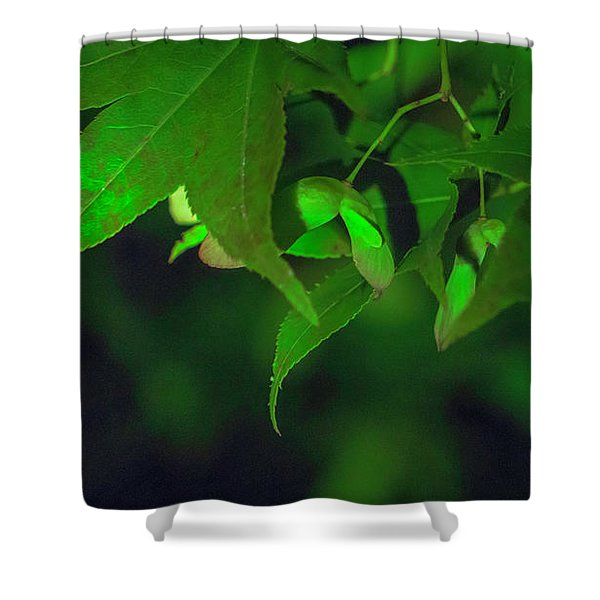 Spider At Night On A Leaf Shower Curtain