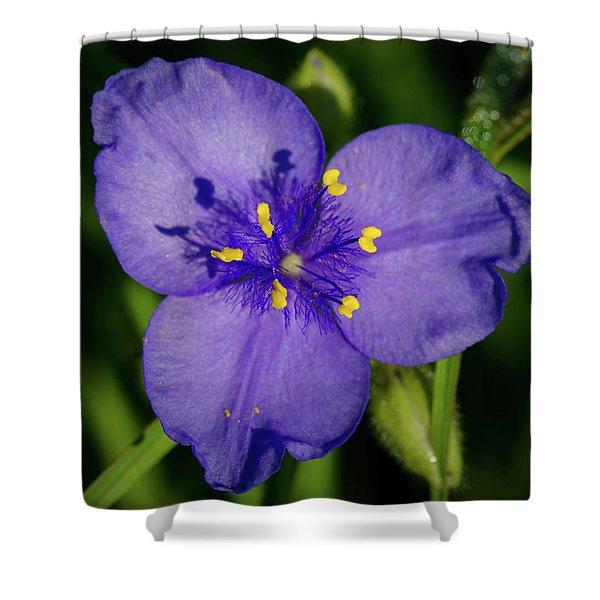 Spiderwort Flower Shower Curtain
