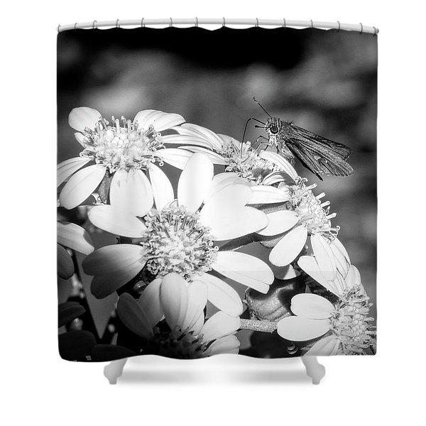 Spotlight To Pollinate Shower Curtain