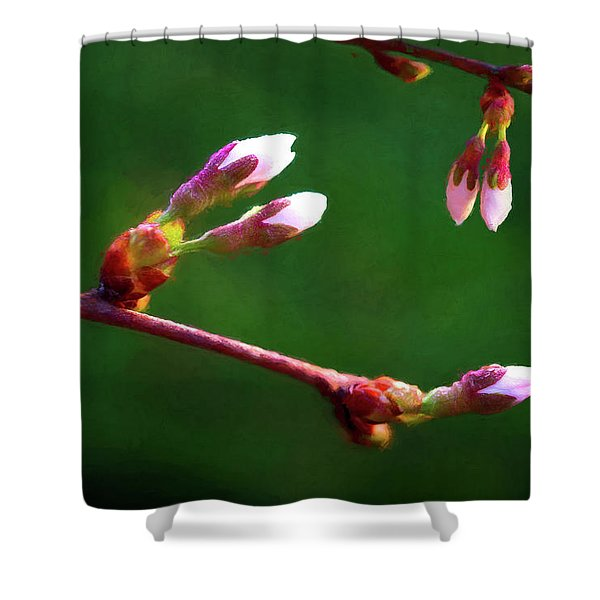 Spring Buds - Weeping Cherry Tree Shower Curtain
