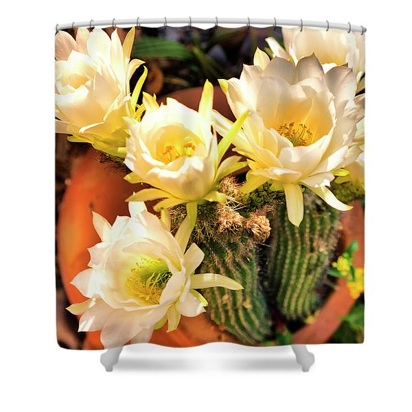 Spring Cactus Blooms Shower Curtain