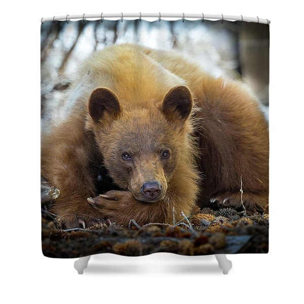Spring Slumber  Shower Curtain