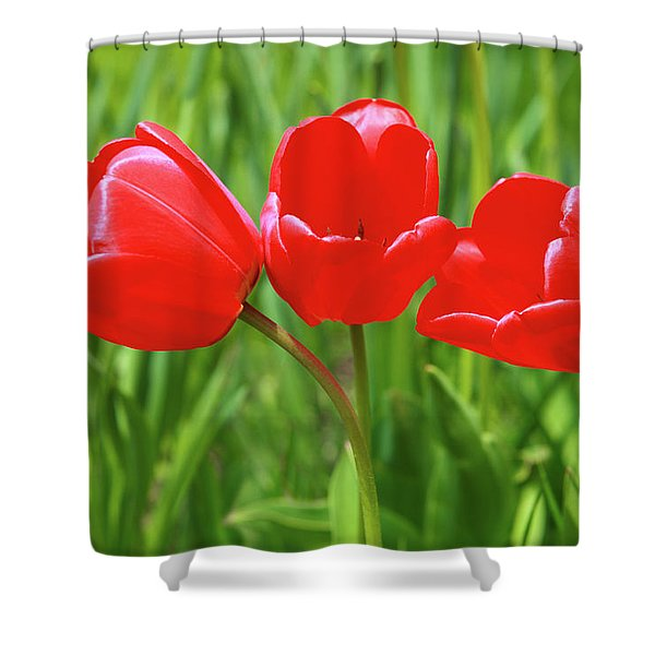 Shower Curtain featuring the photograph Spring Trio by Emily Johnson