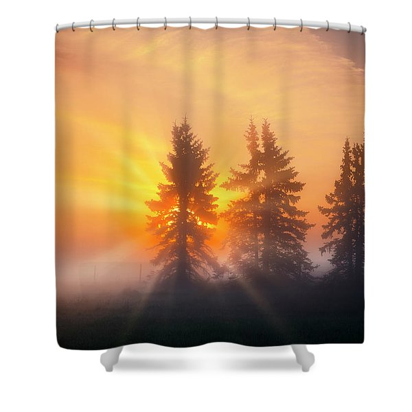 Spruce Trees In The Morning Shower Curtain