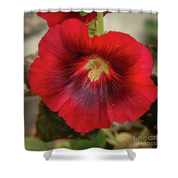 Square Red Hollyhock Shower Curtain