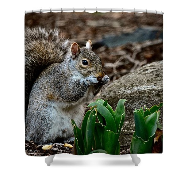 Squirrel And His Dinner Shower Curtain