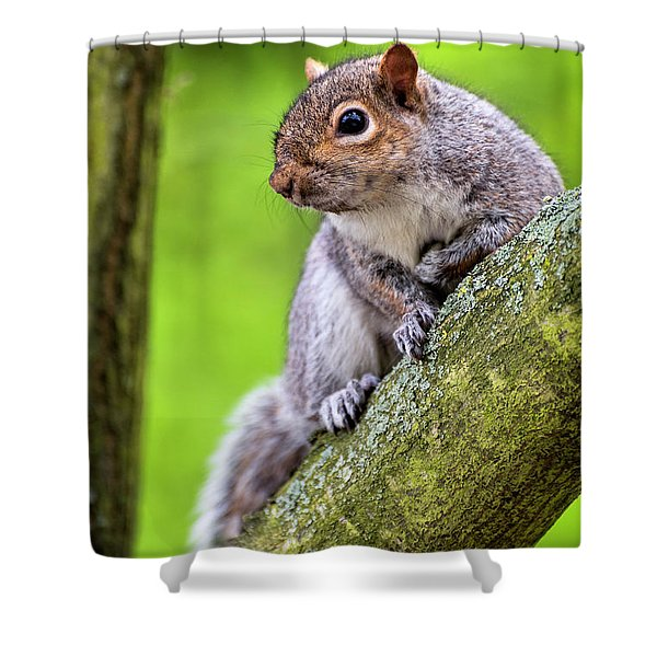 Squirrel At Greenwich Park Shower Curtain