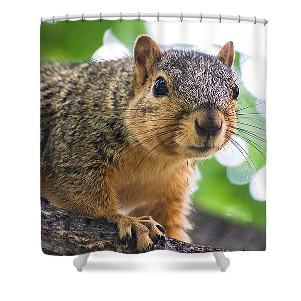 Squirrel Close Up Shower Curtain