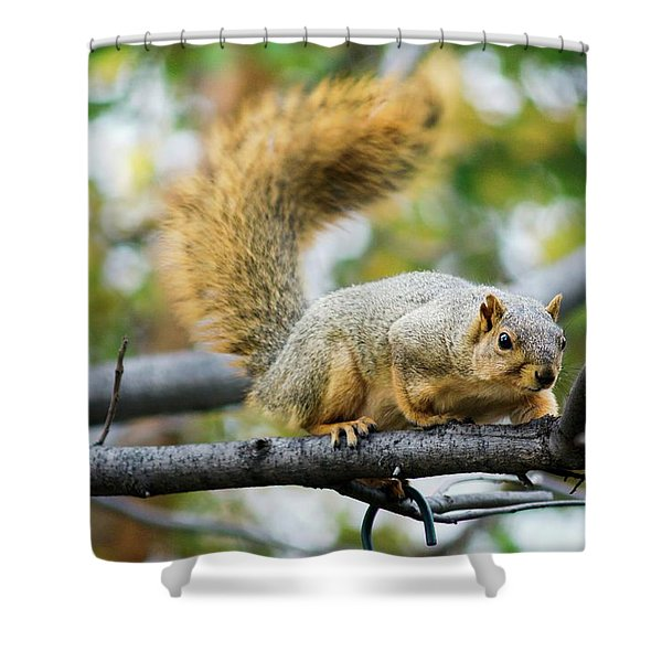Squirrel Crouching On Tree Limb Shower Curtain