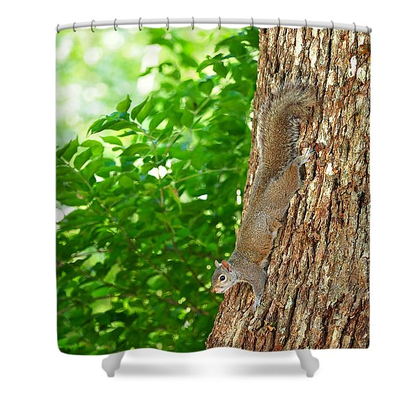 Squirrel On Oak Tree Shower Curtain