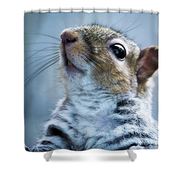 Shower Curtain featuring the photograph Squirrel With Nose In The Air by Scott Lyons