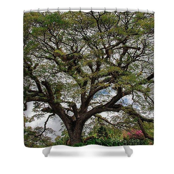 St. Kitts Saman Tree Shower Curtain
