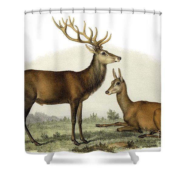 Stag, 1860 Shower Curtain