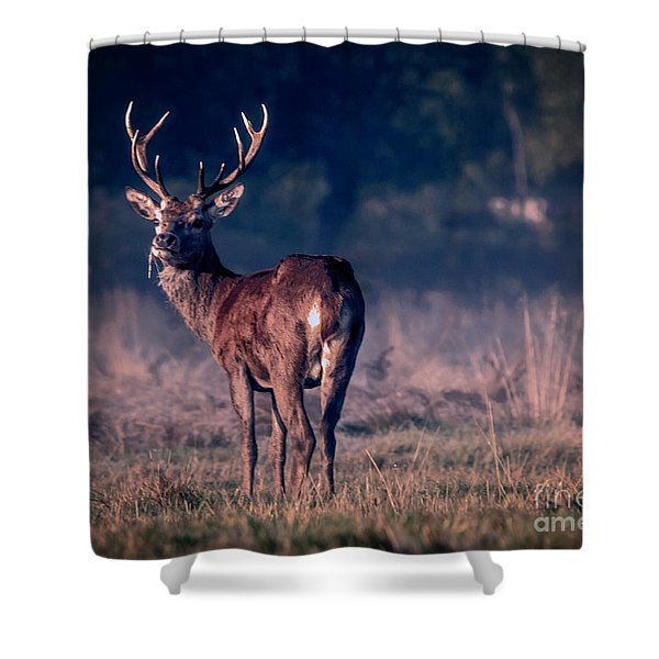 Stag Eating Shower Curtain