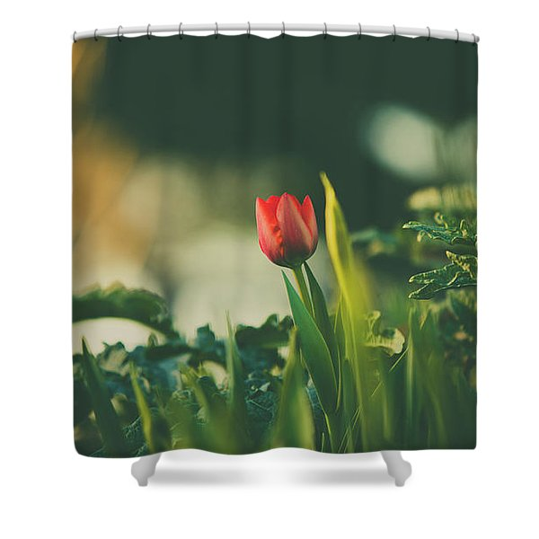 Start Of Spring Shower Curtain