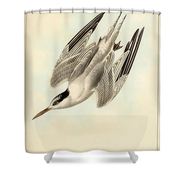 Sterna Elegans Shower Curtain