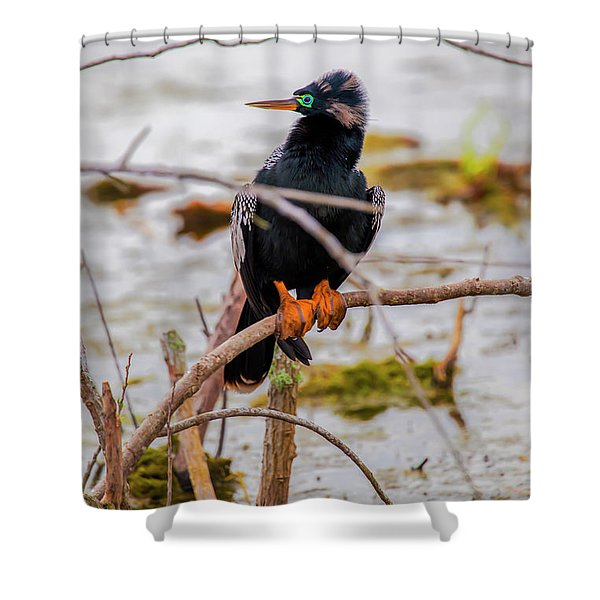 Stunning Anhinga Shower Curtain