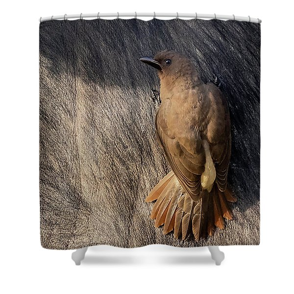 Sub-adult Yellow-billed Oxpecker On Cape Buffalo Shower Curtain