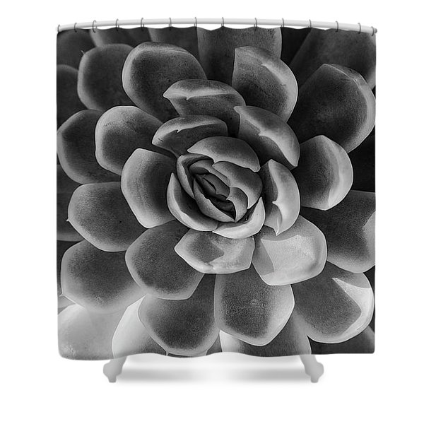 Succulent - Bw - 2 Shower Curtain