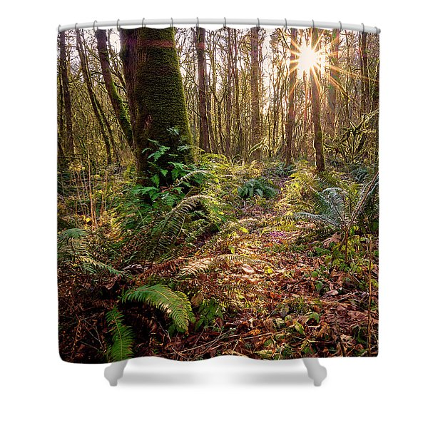 Shower Curtain featuring the photograph Sun Star In Tryon Creek State Park by Whitney Goodey