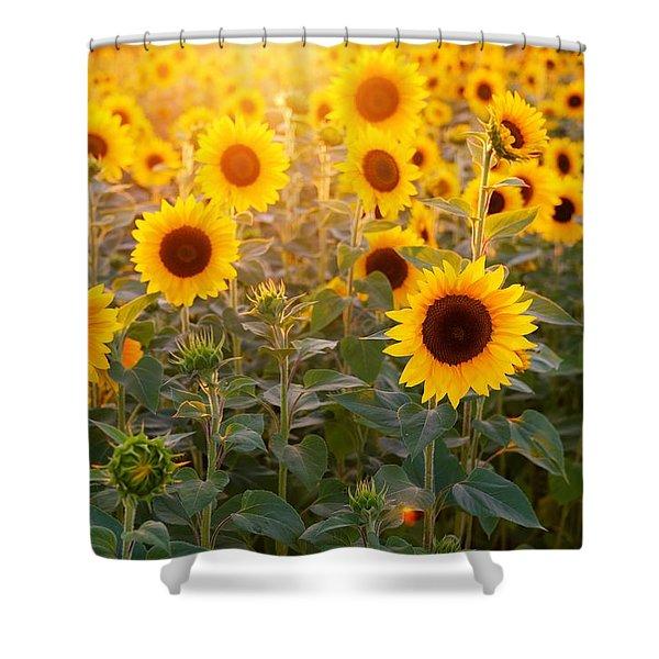 Sunflowers Field Shower Curtain
