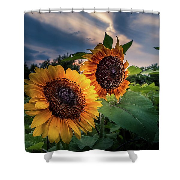 Sunflowers In Evening Shower Curtain