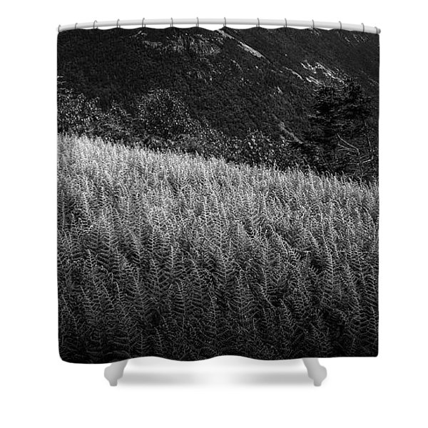 Sunlight On Ferns, Mount Willard Shower Curtain