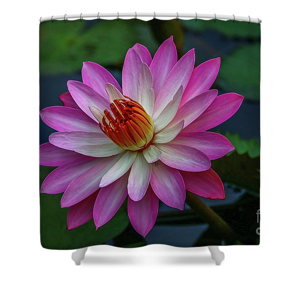 Shower Curtain featuring the photograph Sunlit Lily by Tom Claud