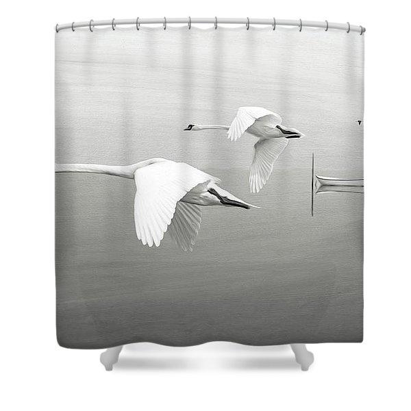 Swans At Sunrise Bw Shower Curtain