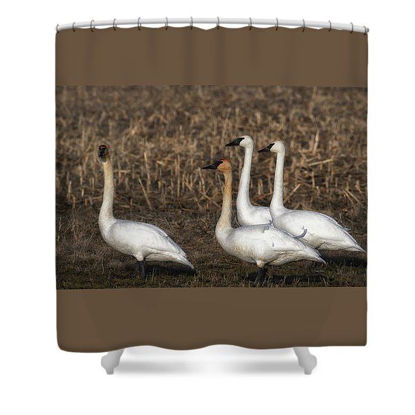 Swans Shower Curtain