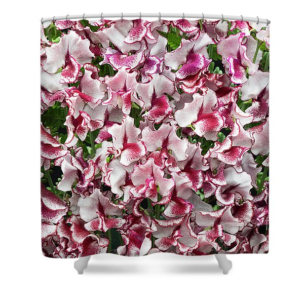 Sweet Pea Lisa Marie Flowers Shower Curtain