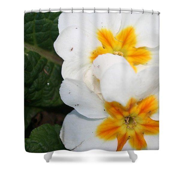Sweet Primrose Shower Curtain