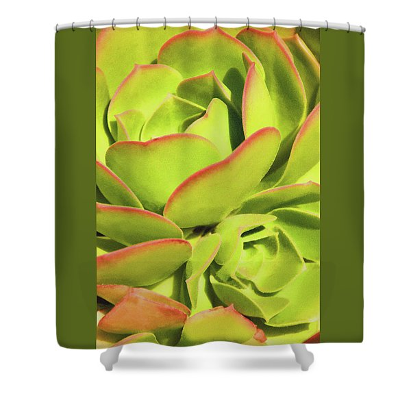 Sweet Succulents I Shower Curtain