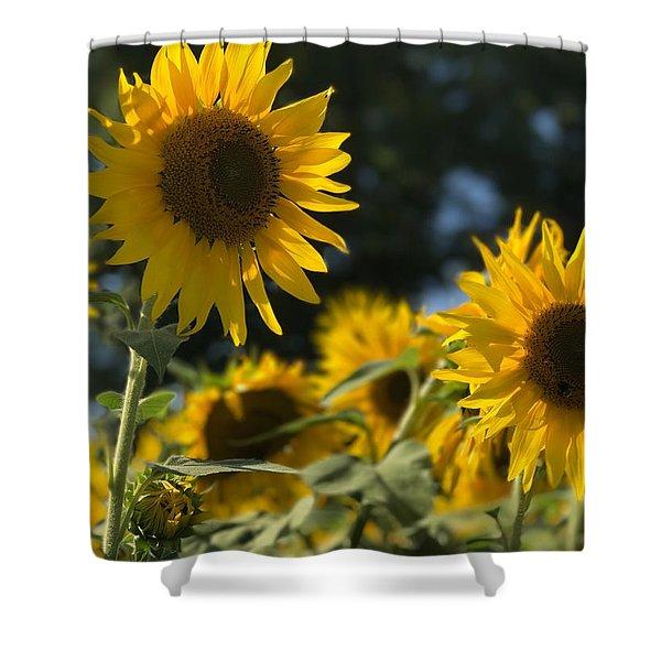Sweet Sunflowers Shower Curtain
