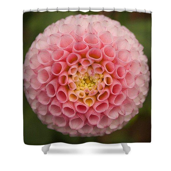 Symmetrical Dahlia Shower Curtain