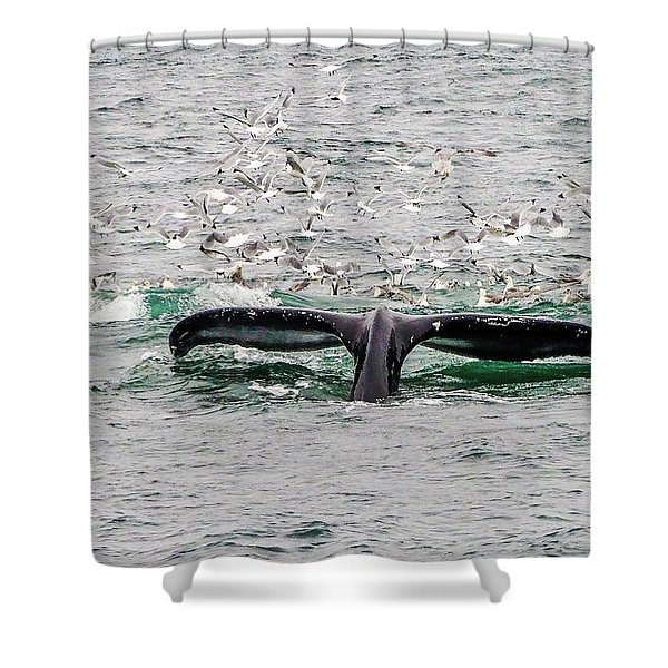Tail Of A Whale Shower Curtain