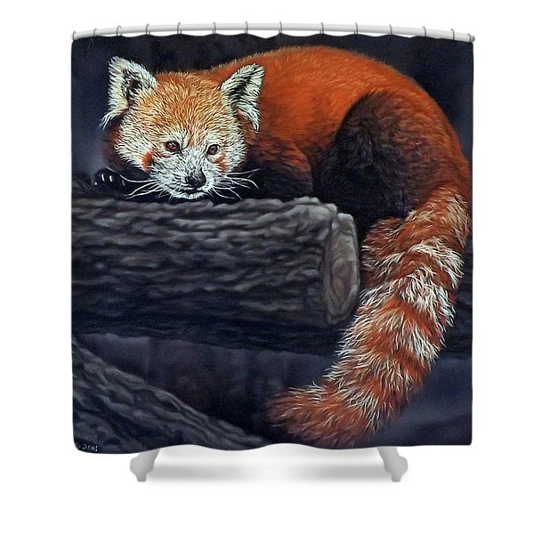 Takeo, The Red Panda Shower Curtain