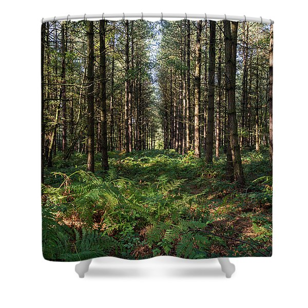 Shower Curtain featuring the photograph Tall Trees In Sherwood Forest by Scott Lyons