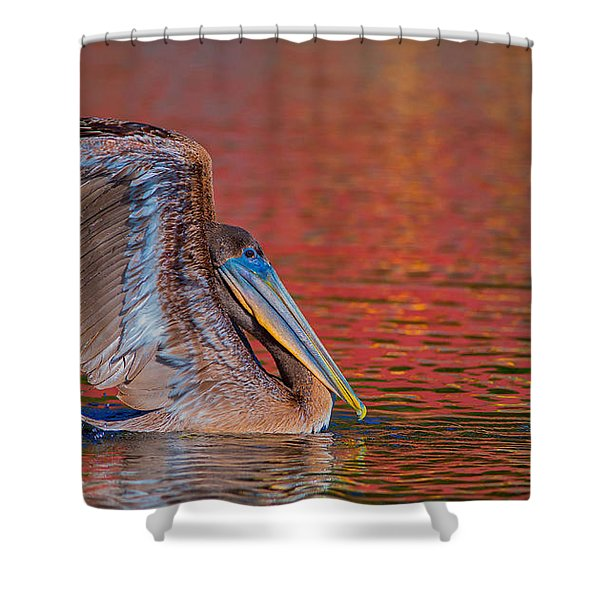 Shower Curtain featuring the photograph Tchefuncte Pelican by Tom Gresham