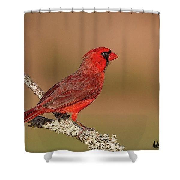 Texas Cardinal Shower Curtain