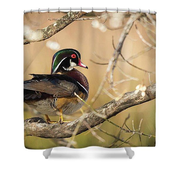 Texas Wood Duck Shower Curtain