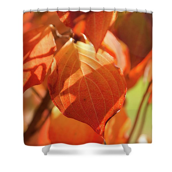 That Autumn Light Shower Curtain