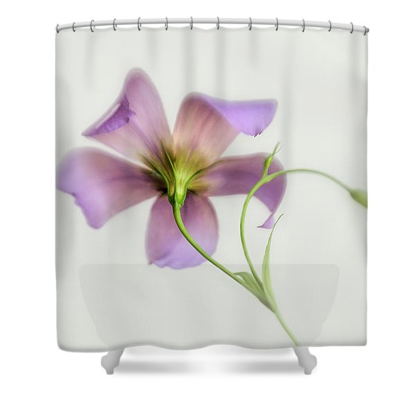 The Backside Of A Texas Bluebell Shower Curtain