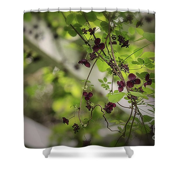 The Chocolate Vine Connection Shower Curtain